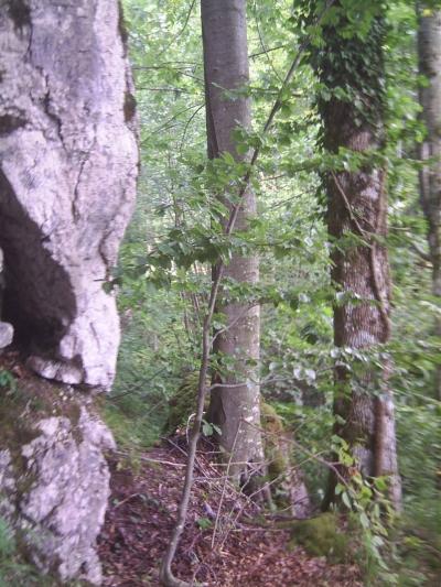 hanging_rock.jpg